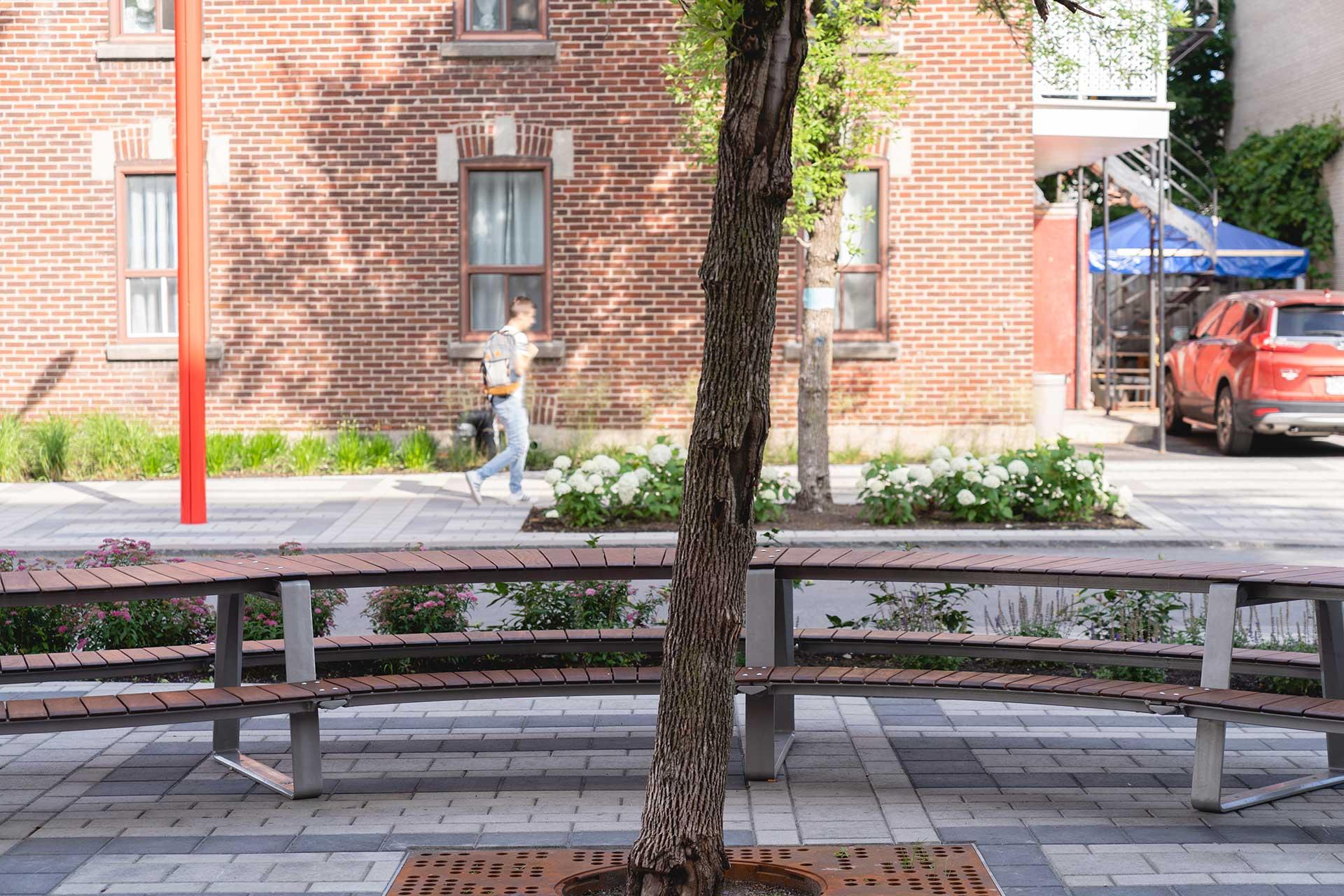Avenue Shamrock table arbre